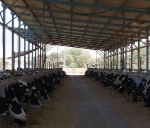 Dairy Cattle Organization