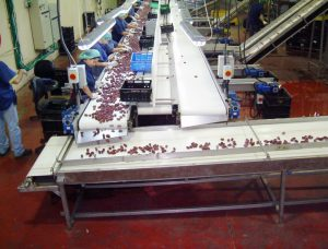Ardom Dates Factories