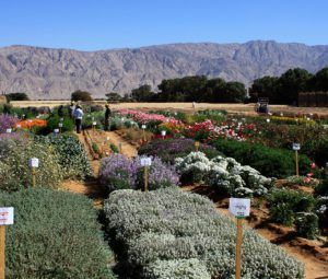 Southern Arava Agricultural Research Organization